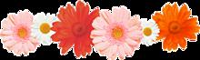 お花 素材の画像(プリ画像)