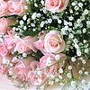 花束 プリ画像