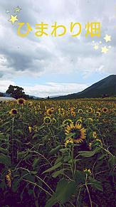 ひまわり畑‼の画像(ひまわり畑に関連した画像)