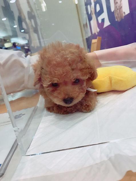 可愛い犬🐶の画像(プリ画像)