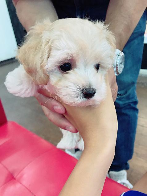 可愛い犬🐶の画像 プリ画像