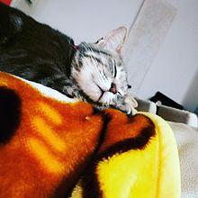 めい(愛猫) プリ画像