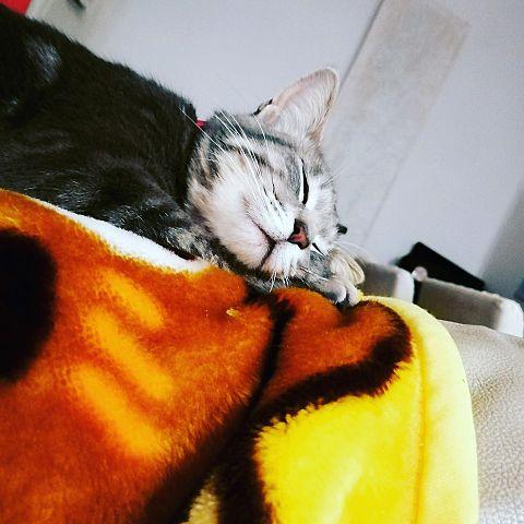 めい(愛猫)の画像 プリ画像