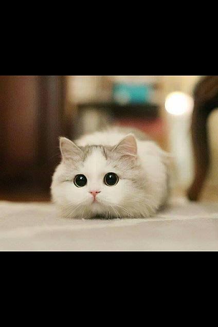 可愛い猫の画像(プリ画像)