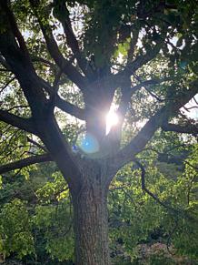 木🌲 プリ画像