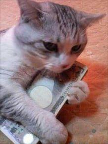 かわいい子猫の画像(プリ画像)