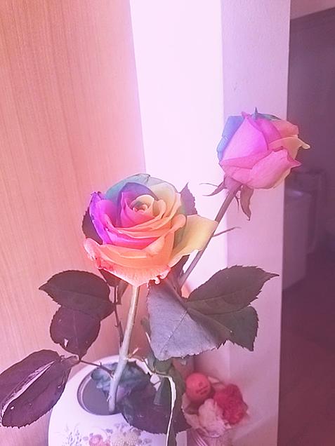 虹色の薔薇💓❤💕の画像(プリ画像)