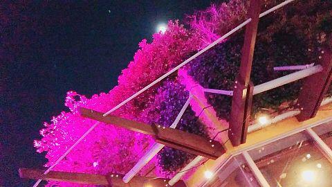 ピンクの木の画像(プリ画像)