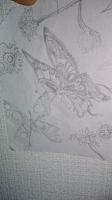 蝶々の画像(蝶々に関連した画像)
