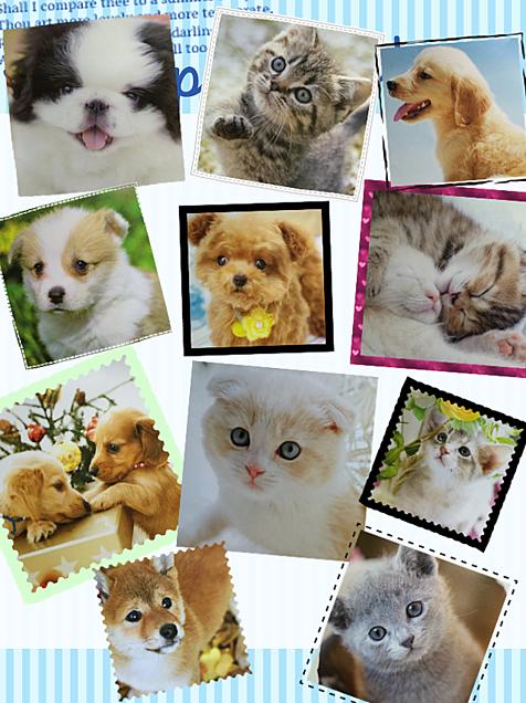 可愛い動物たちの画像(プリ画像)