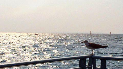 カモメと海の画像(プリ画像)