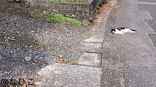 散歩と猫の画像(動物に関連した画像)