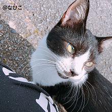 綺麗な目の猫。の画像(自然に関連した画像)