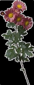 花の画像(花 背景透明に関連した画像)