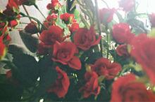 roseの画像(Roséに関連した画像)