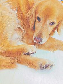 Dogの画像(プリ画像)