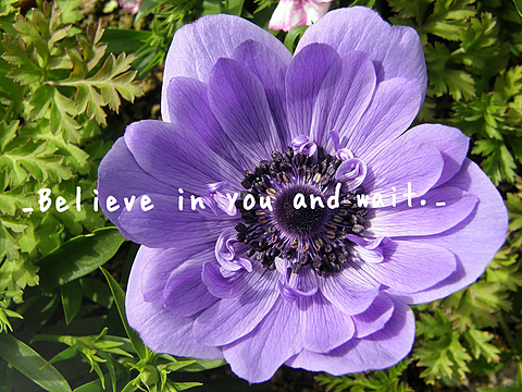 _Believe in you and wait._の画像 プリ画像
