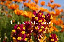 _Notice this love._の画像(復縁に関連した画像)