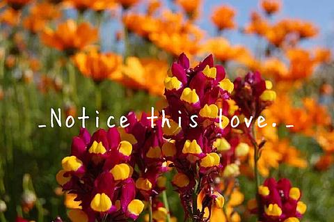 _Notice this love._の画像(プリ画像)