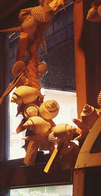 貝殻の画像(プリ画像)