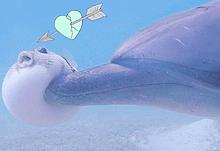 イルカがハリセンボンに…の画像(ハリセンボンに関連した画像)