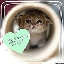 子猫 笑顔の画像(笑顔ポエムに関連した画像)