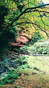 秋の風景。の画像(落ち葉に関連した画像)