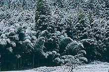初雪🌨️の画像(自然に関連した画像)
