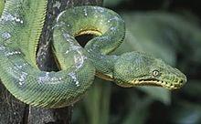 蛇の画像(伊黒小芭内に関連した画像)