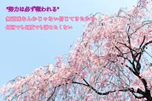 桜〜努力〜の画像(報われるに関連した画像)