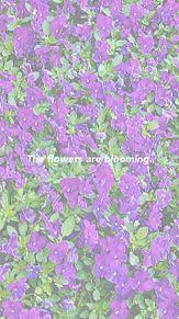 雰囲気加工の画像(花畑に関連した画像)