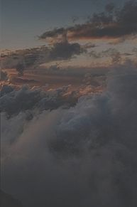 いいね▷▶︎保存の画像(薔薇に関連した画像)