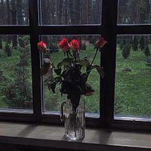 保存▷▶︎▷▶︎いいねの画像(薔薇に関連した画像)