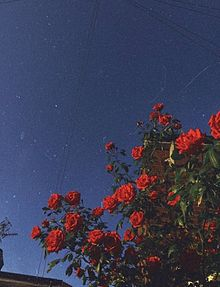 保存▷▶︎▷▶︎いいねの画像(らいんトプ画ホーム画に関連した画像)