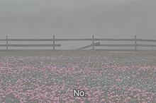 no titleの画像(夢可愛い/ゆめかわいいに関連した画像)