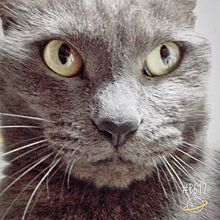 イケメン猫の画像(プリ画像)