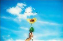 向日葵の花   あなた以外目に入らないわ。の画像(プリ画像)