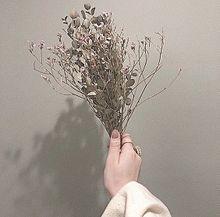 ほぞんはいいねの画像(Flowerに関連した画像)