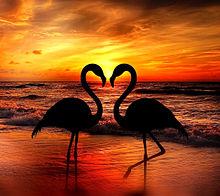 夕焼けとフラミンゴの画像(夕景に関連した画像)