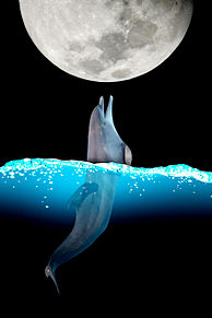 イルカのボール遊びの画像(遊びに関連した画像)