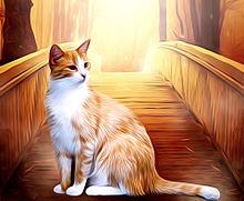 茶トラ白猫🐈️秋の画像(白猫に関連した画像)