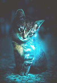 猫の日🐈️子猫のファンタジー プリ画像