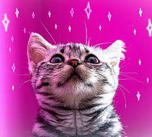 猫の日🐈️ヨコミミ様 プリ画像