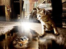 猫の日🐈️水に映る姿は…🦁 プリ画像