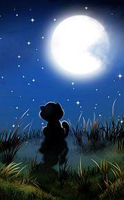 🎑お月見ネコ🐈️ プリ画像