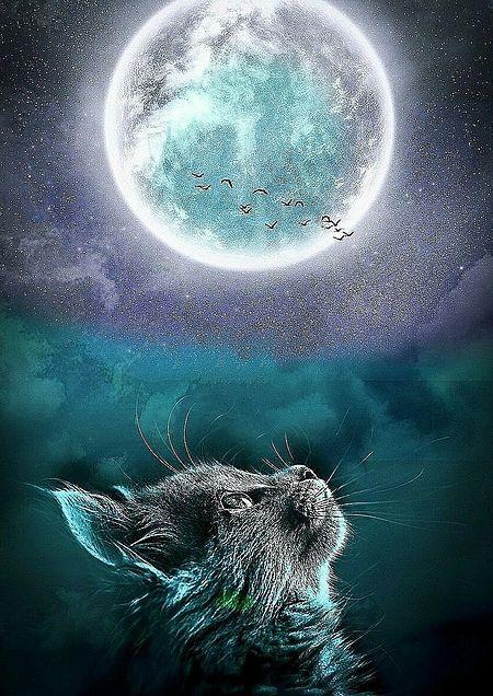 満月と猫の画像(プリ画像)