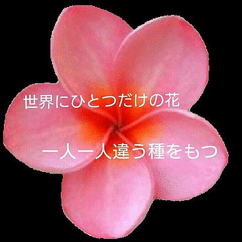 世界にひとつだけの花の画像(プリ画像)