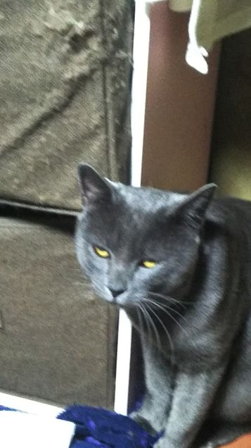 おもしろ猫の画像 プリ画像