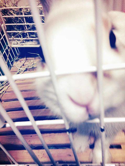 ウサギの画像(プリ画像)