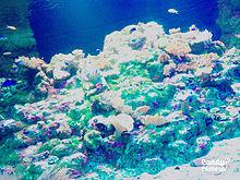 江ノ島ーーー💓💓の画像(新江ノ島水族館に関連した画像)
